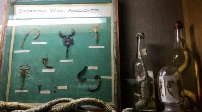 Mummies, lizards, stones: the wondrous ingredients of old medicines