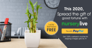 [Back Again] NurseryLive - Lucky Bamboo Plant For FREE