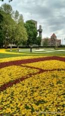 Dywany z tulipanów, w tle Zamek
