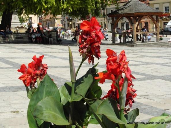 Kwiaty na Rynku