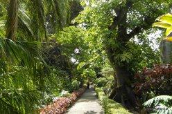 W Ogrodzie Botanicznym w Puerto de la Cruz