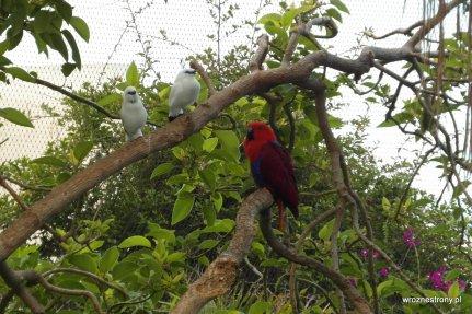 Papugi w Loro Parque