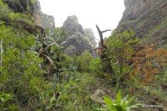 Roślinnosć górnej części wąwozu Barranco del Infierno