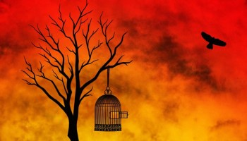 FREEDOM by Stanley Egeonu