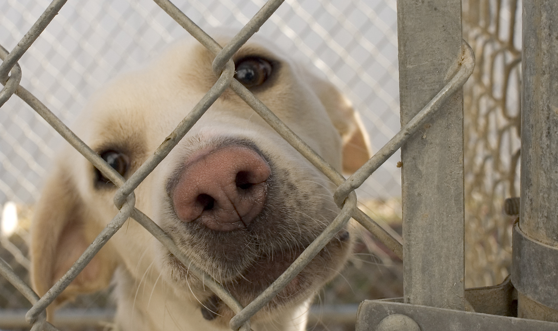 Dog_in_animal_shelter_in_Washington,_Iowa_114351