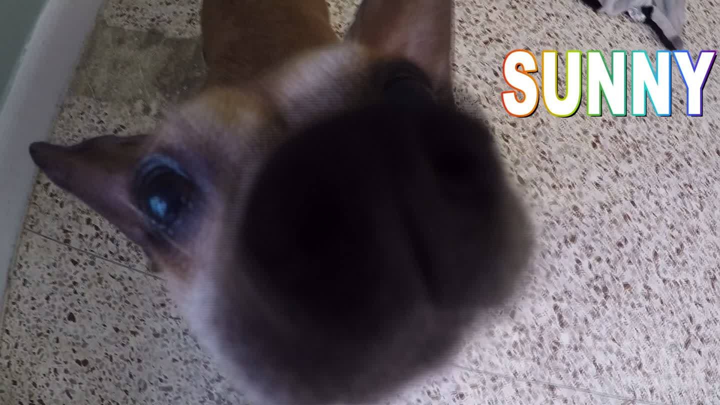 Sunny is up for adoption