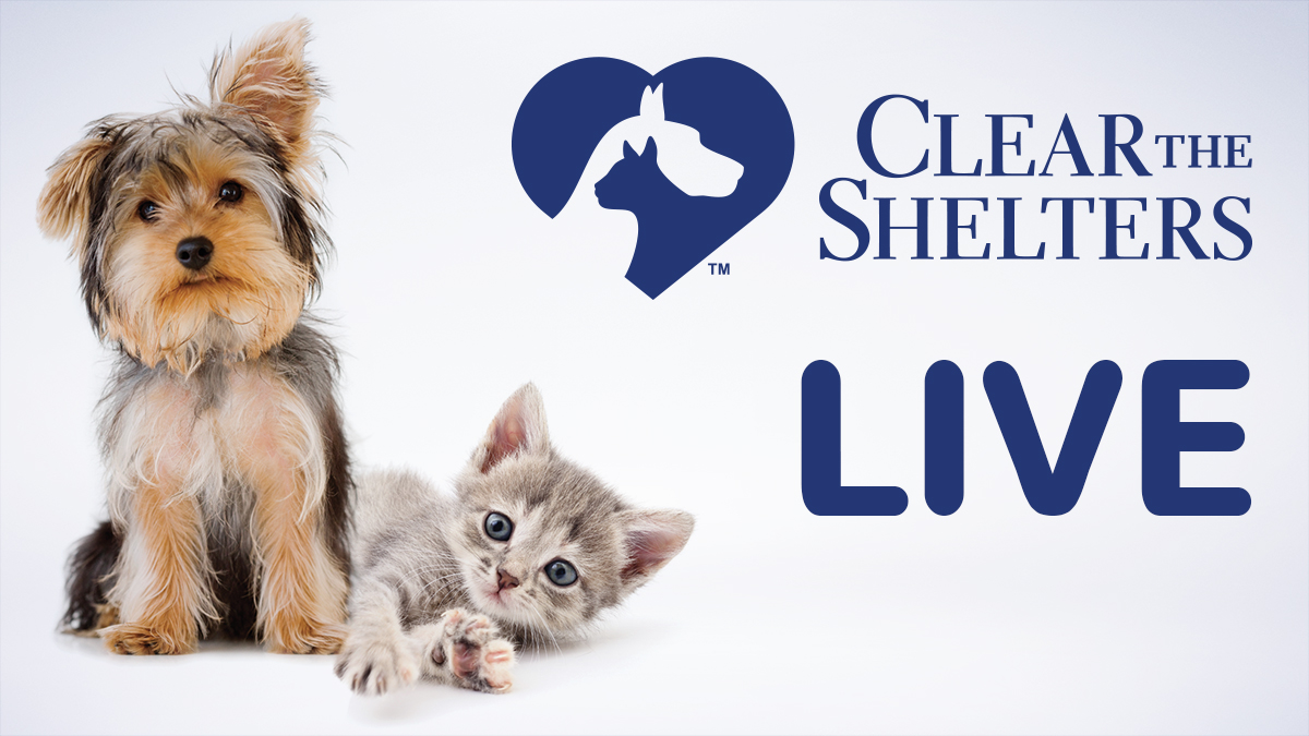 Clear the Shelters: Live Coverage Across the US | WSAV-TV