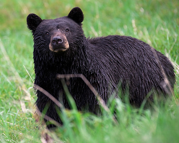 Teen Injured in Bear Attack in Great Smoky Mountains Nat'l Park (Image 1)_16862