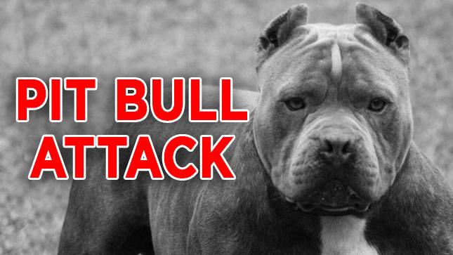 pit-bull-attack-generic_25731