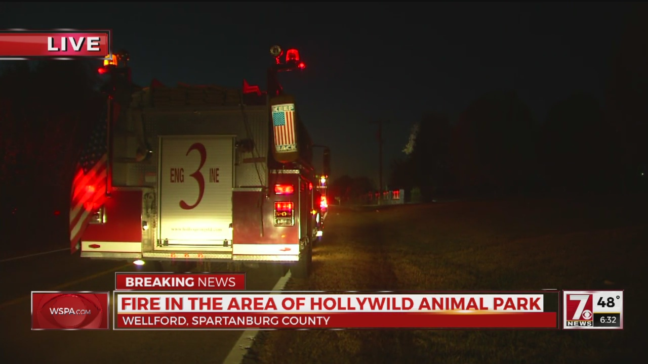 Hollywild Fire_277161