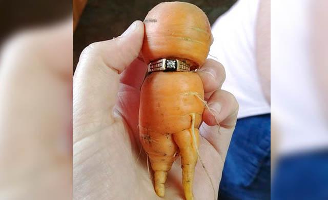 carrot1_439846
