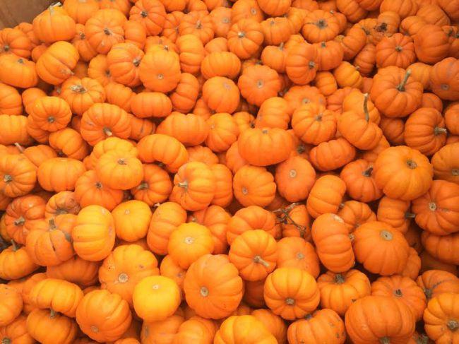 pumpkin_467462