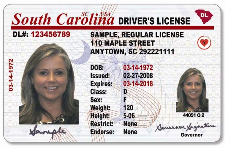 Sample SC Drivers License_305058
