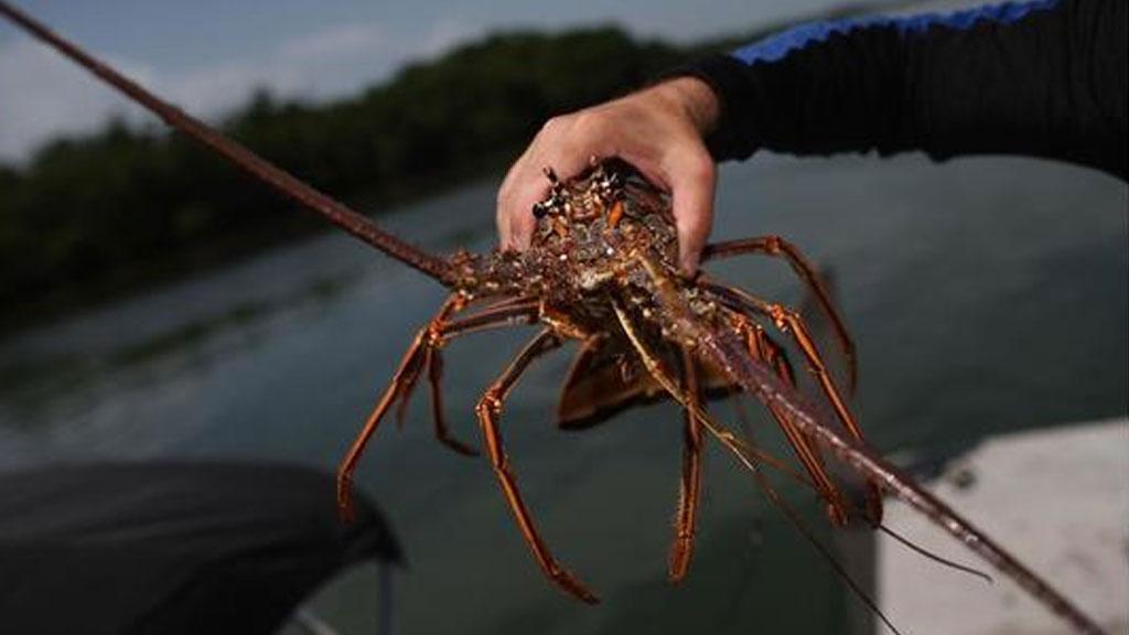 lobster_1537387636342.jpg