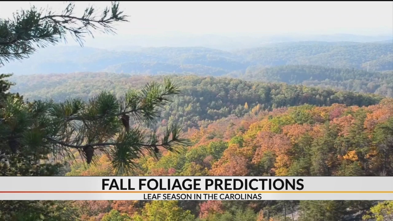 Fall foliage predictions for Carolinas