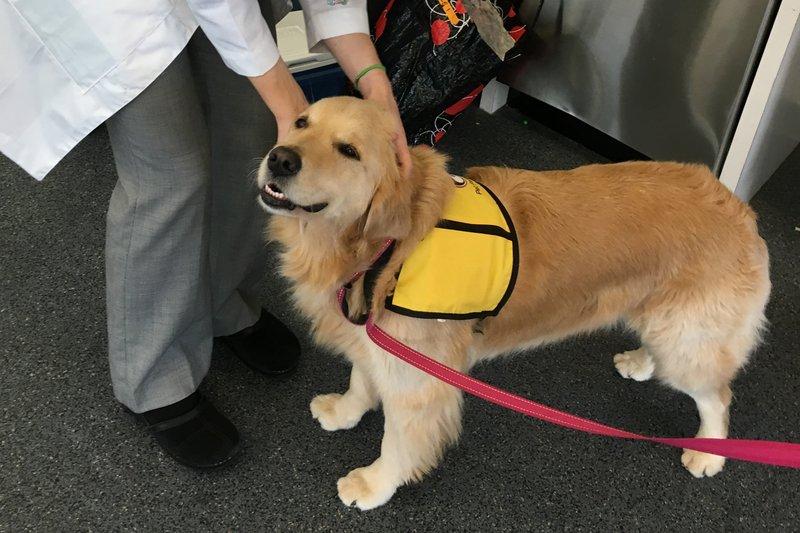 therapy dog_1538765703826.jpeg.jpg