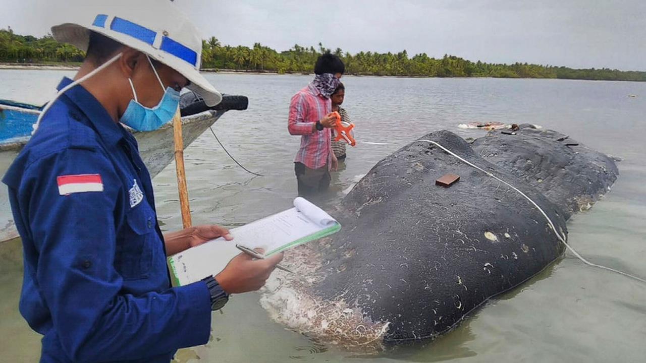whale_1542809478927.jpg