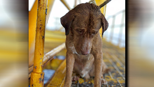dog rescued_1555433383949.jpg_82763913_ver1.0_640_360_1555437217480.jpg.jpg
