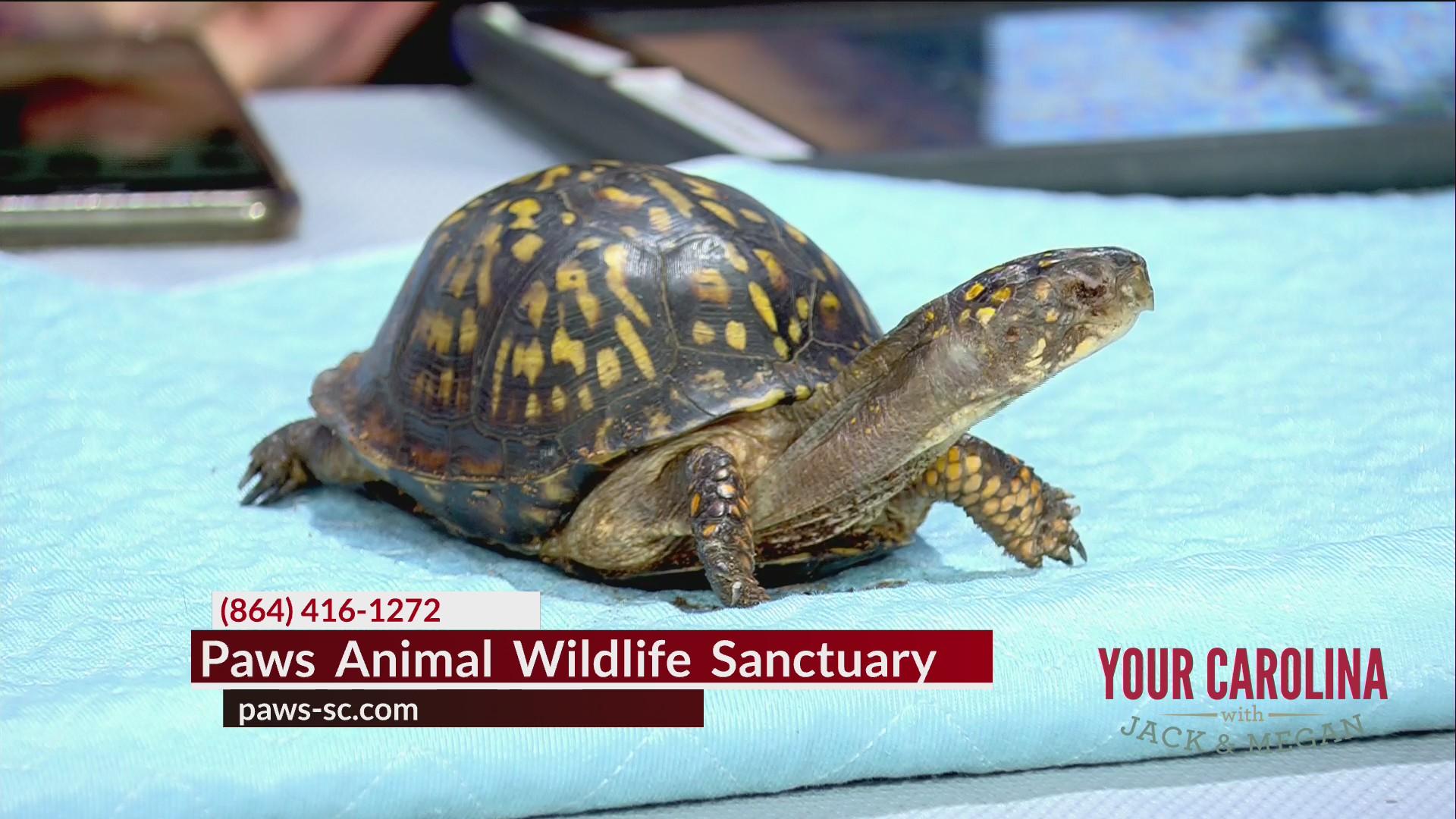 Paws Animal Wildlife Sanctuary