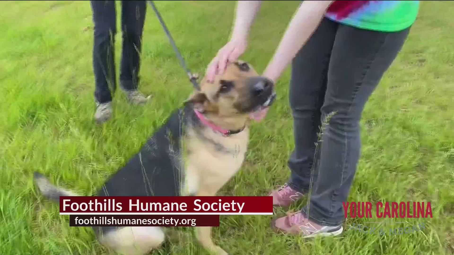 Furry Friend Friday With Foothills Humane Society