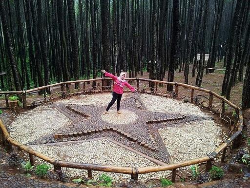 Hutan Pinus Mangunan Imogiri Bantul Yogyakarta Wisata Populer & Terbaik jogja