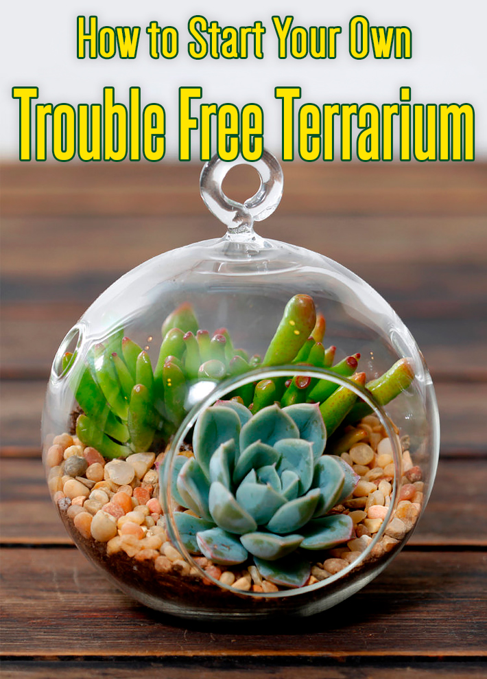 How to Start Your Own Trouble Free Terrarium
