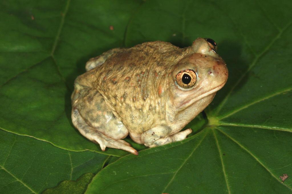 Photo quiz 1 Amphibians