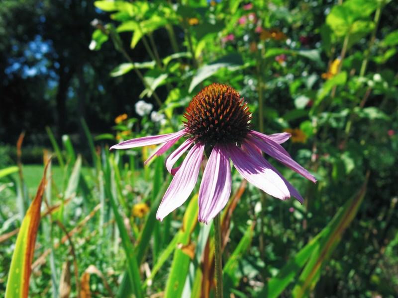 Blumen im Bethmann Park