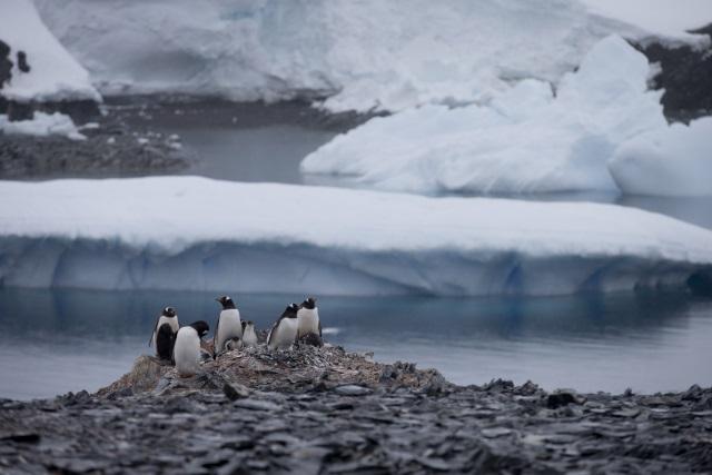 Antarctica_97258