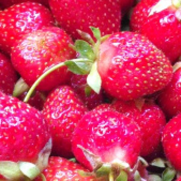 strawberries-pelton_40339