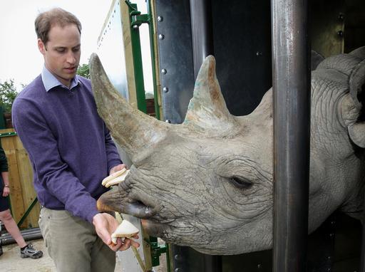 Britain Black Rhinos_342481