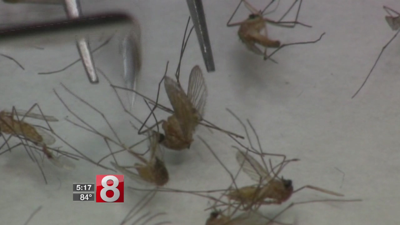Mosquitoes test positive for West Nile Virus in West Haven