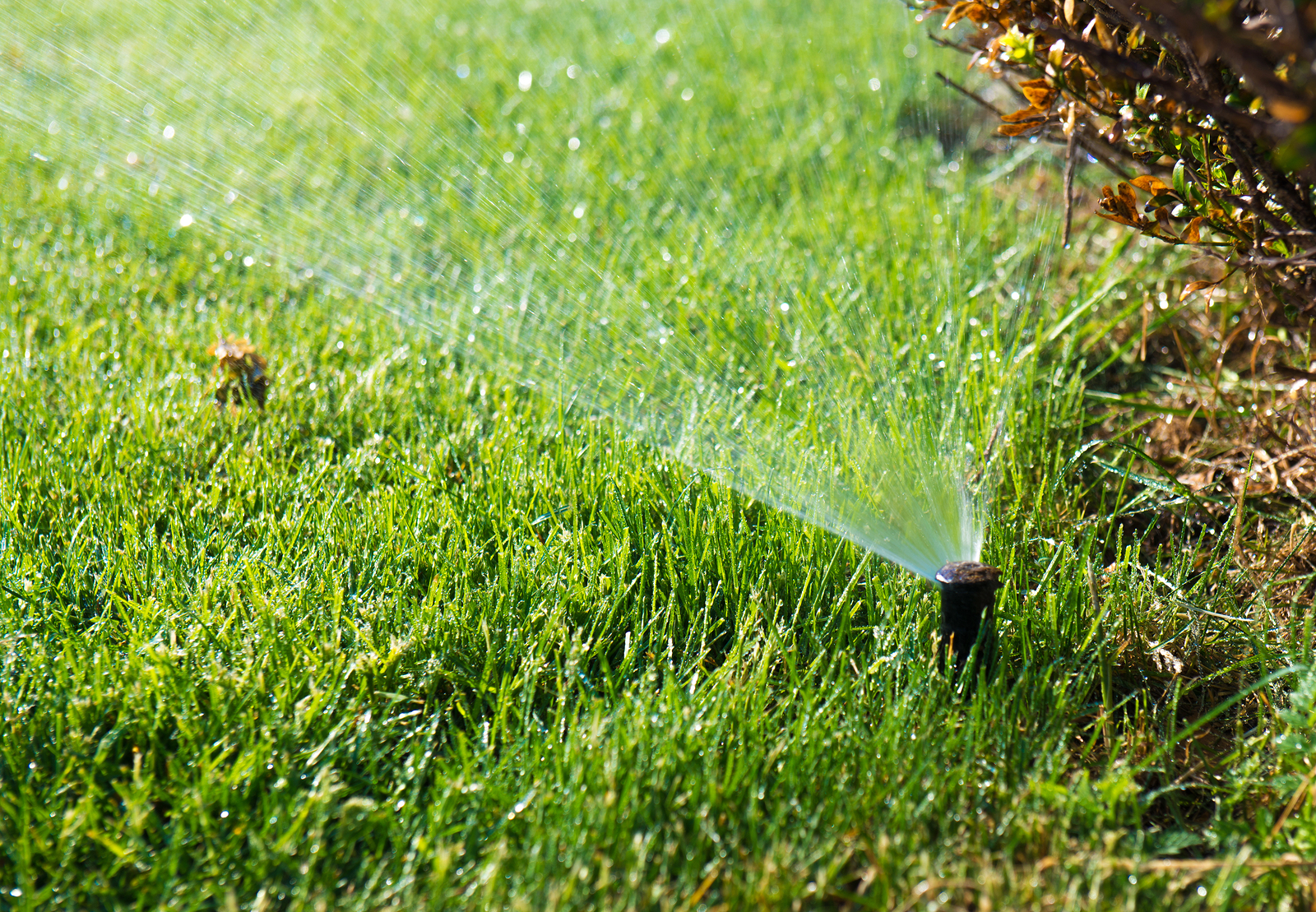 Lawn water sprinkler spraying water over grass in garden_335228