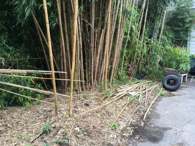 norwich bamboo_544874