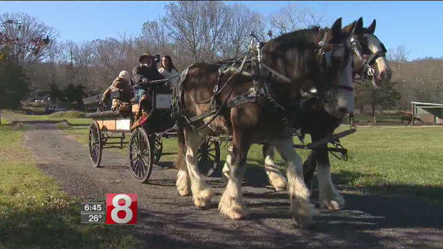 horse carriage_570077