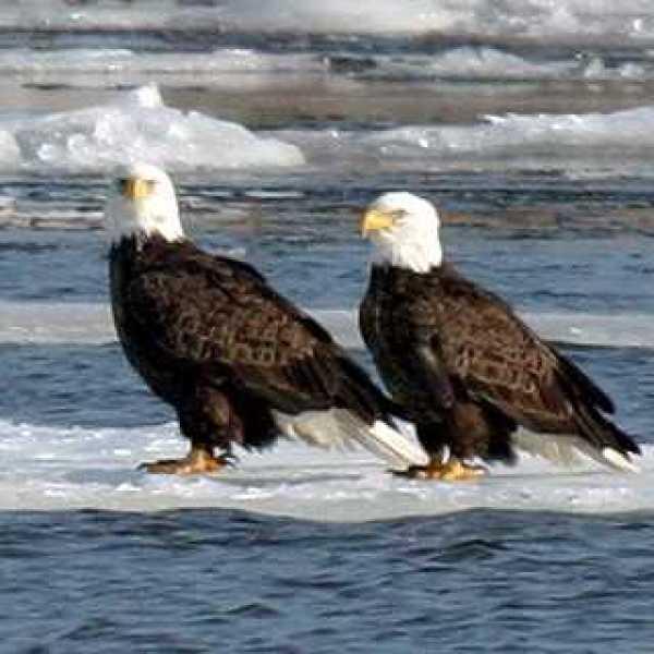 eagles_612865