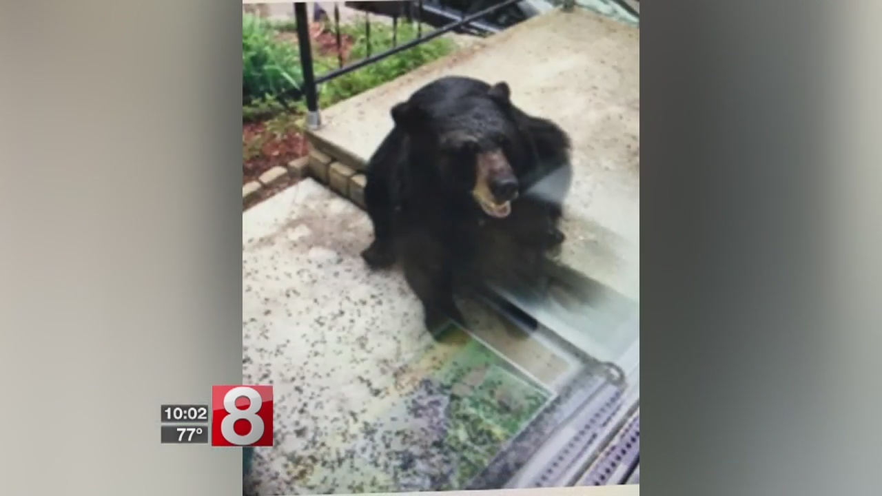 Bear euthanized after breaking into Torrington home