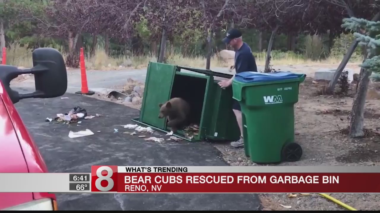 Firefighters_find_bear_cubs_in_garbage_b_0_20181003114753