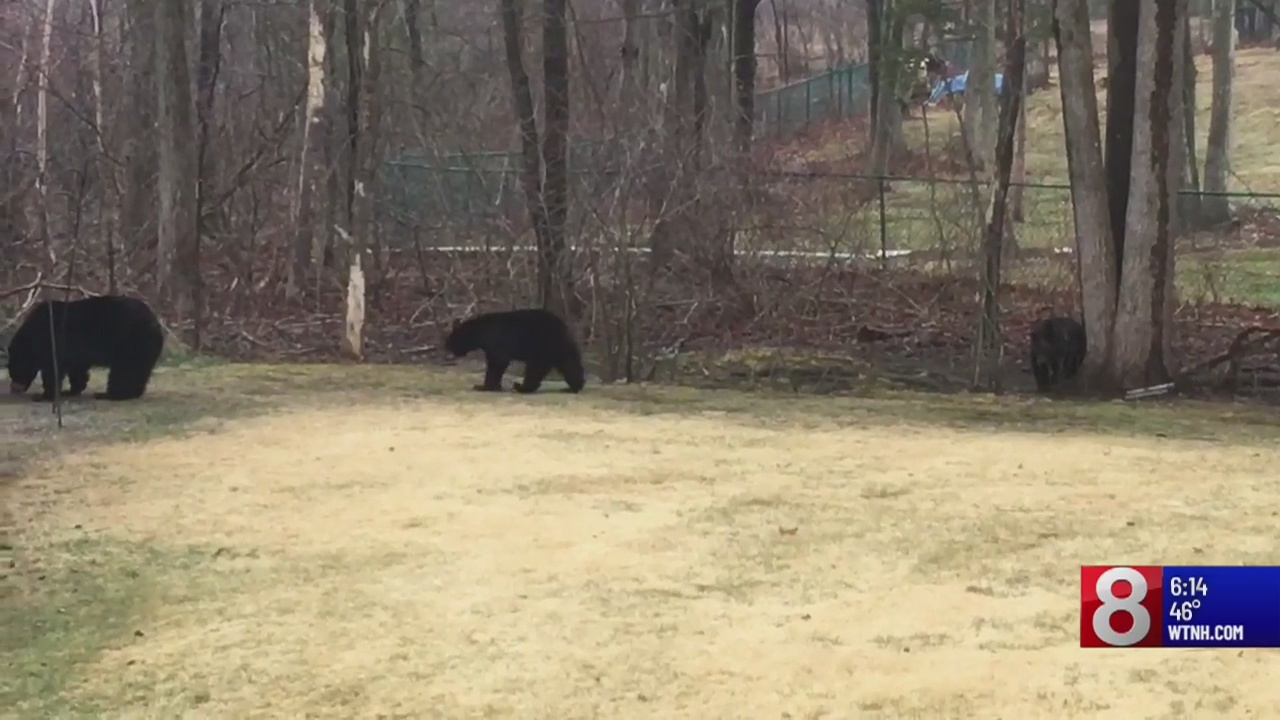 Bear hunt to unused satellite TV dish ban before Assembly
