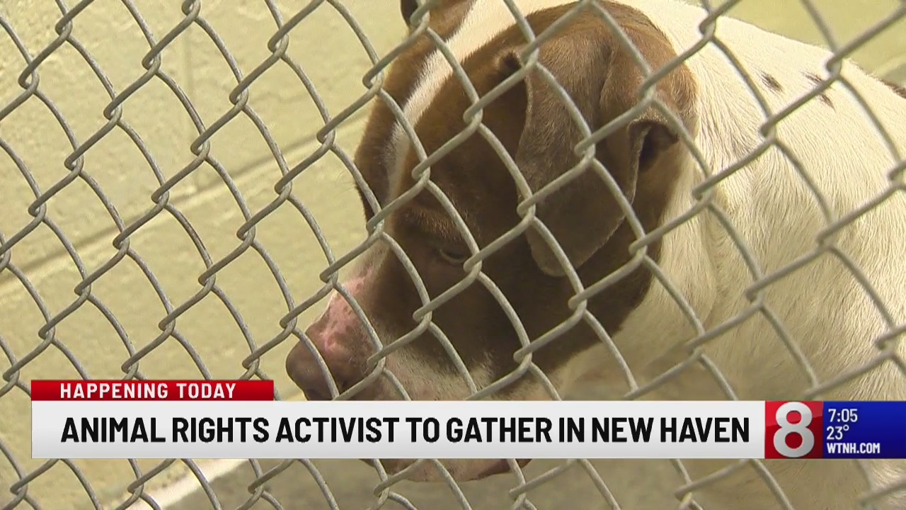 Animal rights activists to gather in New Haven
