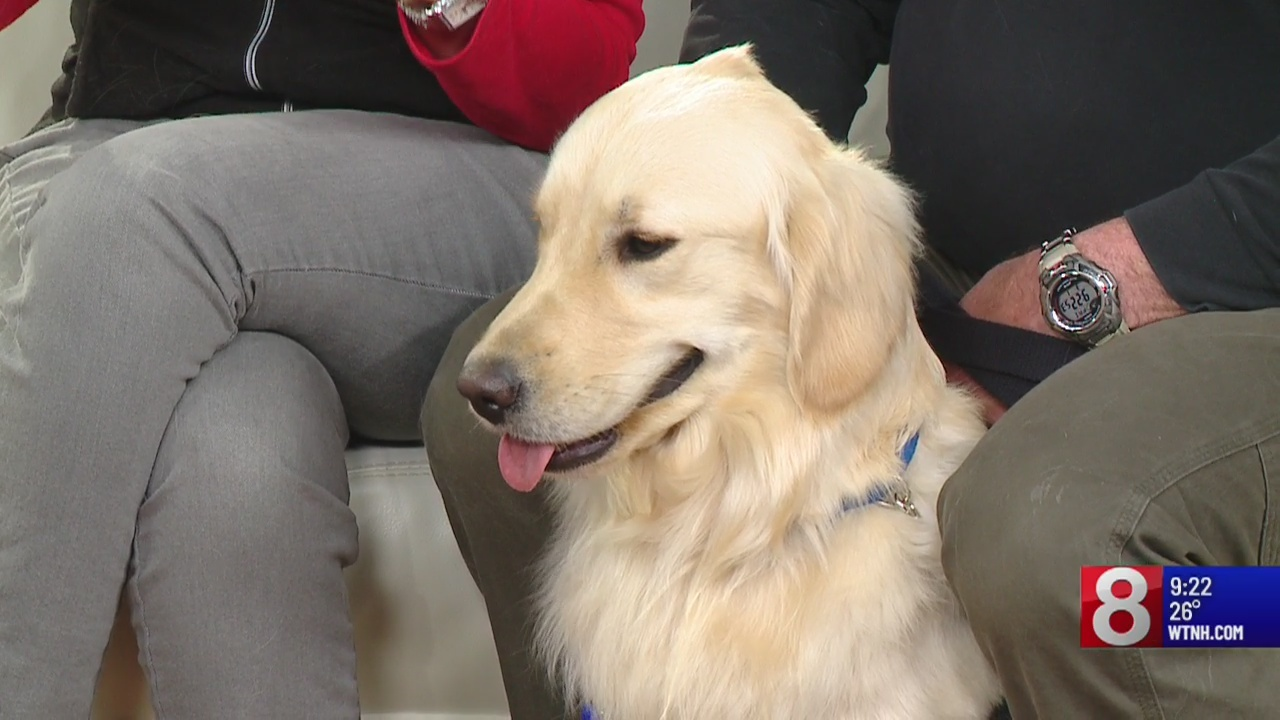 The importance of service dogs