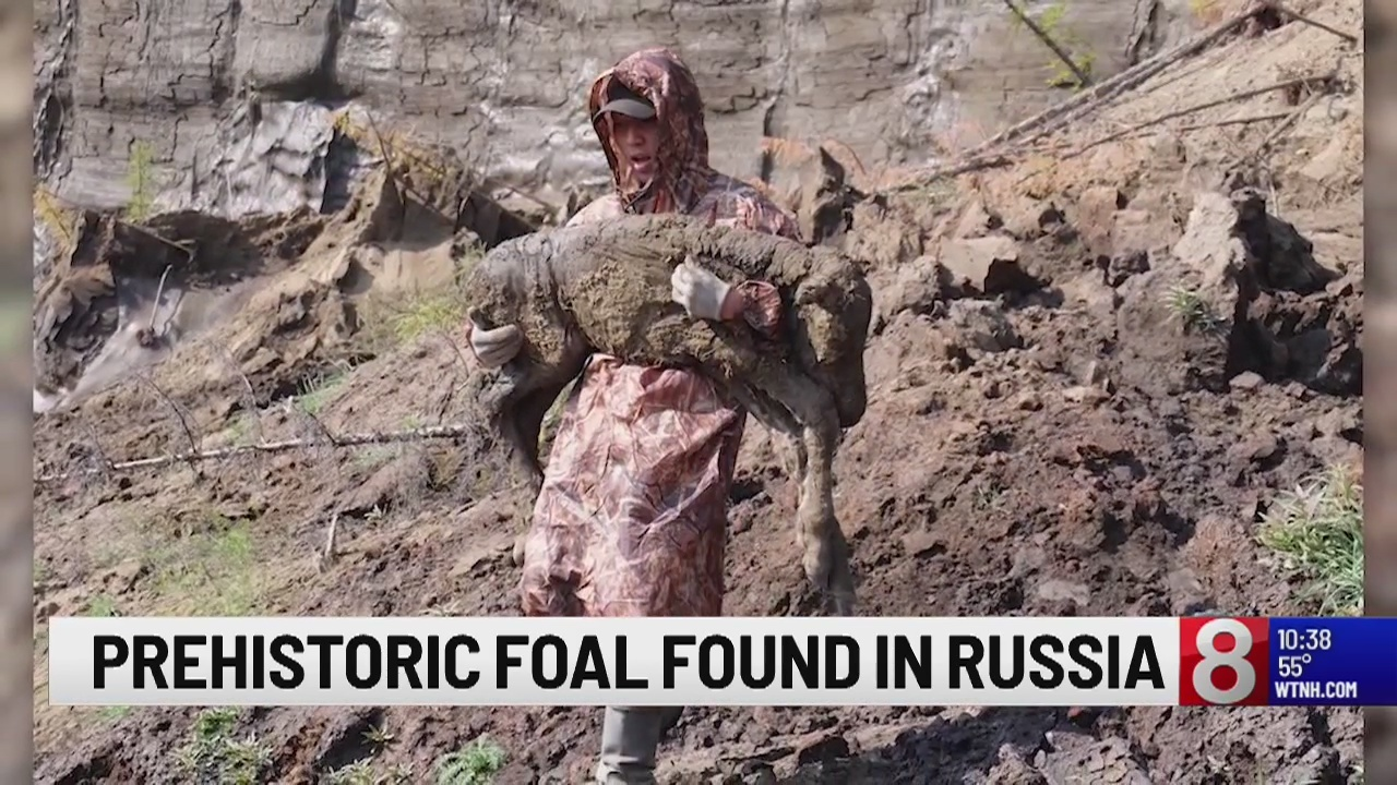 Prehistoric foal found in Russia