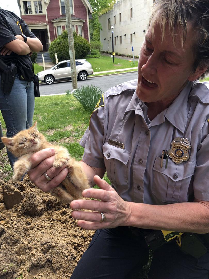 Hartford cat rescue.jpg