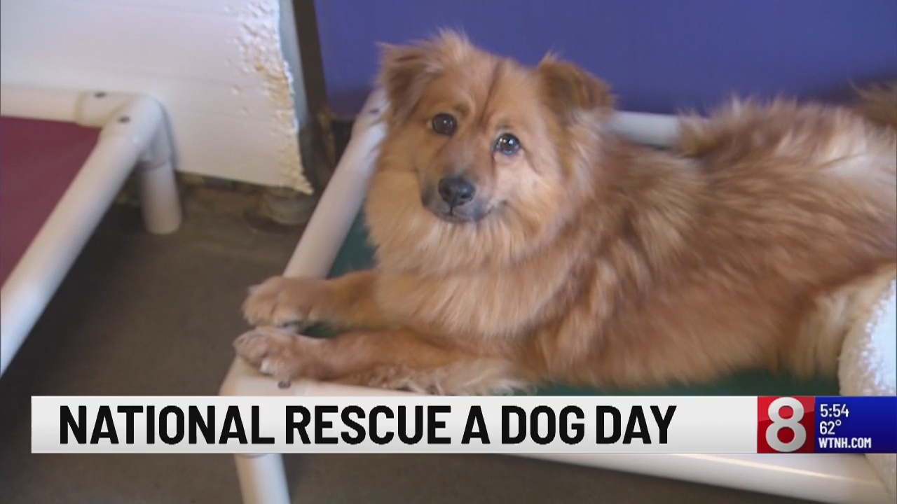 Monday is National Rescue Dog Day!