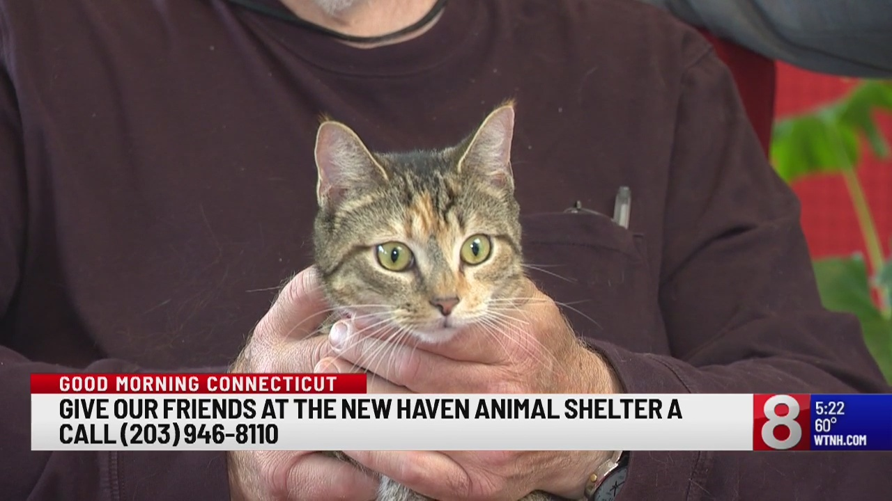 Pet of the Week: Scooter
