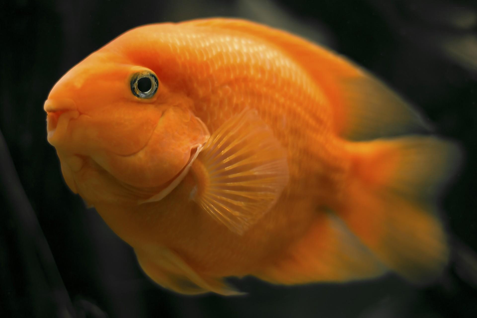 fish_1560940194388.jpg