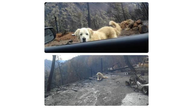 dog camp fire_1544369962312.jpg.jpg