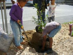 ARBOR DAY IN WESTLAKE - 7 SEPTEMBER '12 036