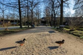 Endlich passt das Wetter für einen ersten Frühlingsspaziergang im Hofgarten der Residenz! ;-)