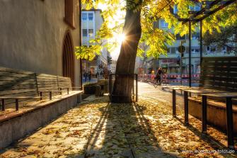 Herbstliches Gegenlicht im Bürgerspital Weingarten in der Semmelstraße.